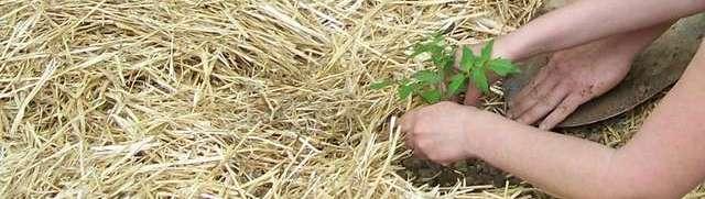 Lasagna gardening - κηπουρική χωρίς σκάψιμο